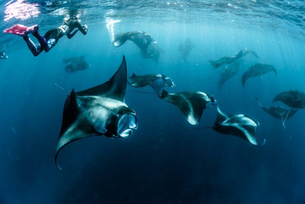 Join komodo tour and watch manta rays at manta point   Hello Flores